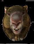 0 Wombat Nought - John Duffield duffield-design