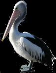 1 Pelican  Bev Dunbar Maths Matters