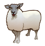 1 Sheep - John Duffield duffield-design