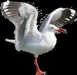 1 legged seagull faces right (Position F/1/2) Bev Dunbar Maths Matters