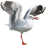 1 legged seagull Bev Dunbar Maths Matters