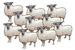 10 Sheep - John Duffield duffield-design