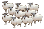 10 Sheep - John Duffield duffield-design copy