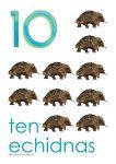 10 echidnas Poster John Duffield duffield-design