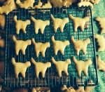 12 Cat Biscuits Bev Dunbar Maths Matters
