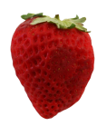 1x1 strawberry-Bev-Dunbar-Maths-Matters-Resources copy