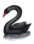2 Swan Two - John Duffield duffield-design
