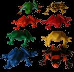 2 by 4 frog array Bev Dunbar Maths Matters