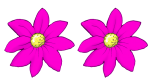 2 flowers - all pink - fractions - John Duffield