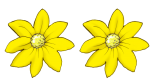 2 flowers - all yellow - fractions- John Duffield