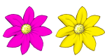 2 flowers - half pink half yellow John Duffield