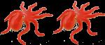 2 octopuses Bev Dunbar Maths Matters