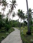 22 m tall Palm Tree Heights Vanuatu Bev Dunbar Maths Matters