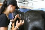 2D Checkerboard horse pattern Bev Dunbar Maths Matters
