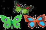 3 Butterfles Bev Dunbar Maths Matters