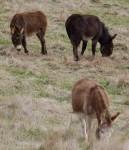 3 Donkeys - farm animals Bev Dunbar Maths Matters