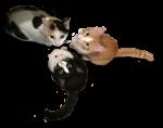 3 Kittens Bev Dunbar Maths Matters