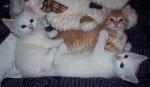Count by 3s - Kittens Bev Dunbar Maths Matters