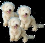 3 fluffy pups Bev Dunbar Maths Matters