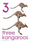 3 kangaroos Poster John Duffield duffield-design
