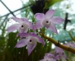 3 mauve orchids Bev Dunbar Maths Matters