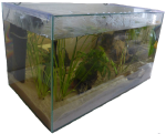 3D rectangular prism aquarium - volume - Bev Dunbar Maths Matters