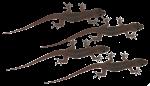 4 Geckos Bev Dunbar Maths Matters