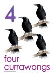 4 currawongs Poster John Duffield duffield-design