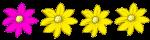 4 flowers -1 quarter pink - fractions - John Duffield