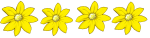 4 flowers - all yellow - fractions - John Duffield