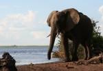 4 m high African Elephant Bev Dunbar Maths Matters