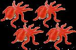 4 octopuses Bev Dunbar Maths Matters