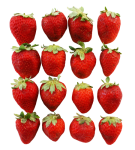 4x4 strawberries square number pattern Bev-Dunbar-Maths-Matters