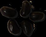 5 Black Jellybeans Bev Dunbar Maths Matters