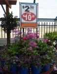 5 for $10 Flower Pots Bev Dunbar Maths Matters