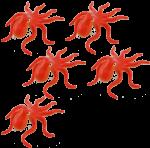 5 octopuses Bev Dunbar Maths Matters