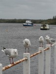 5 Seagulls Bev Dunbar Maths Matters