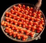 50 x Piles of 4 tomatoes Bev Dunbar Maths Matters