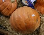 52 kg pumpkin at the Show Bev Dunbar Maths Matters