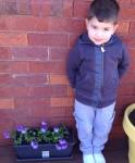 6 Joeys pansies in full flower -Time