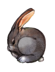 6 Rabbit Six - John Duffield duffield-design