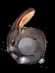 6 Rabbit Six - John Duffield duffield-design