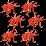 6 octopuses Bev Dunbar Maths Matters