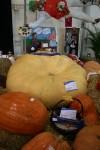618 kg First Prize Pumpkin at the Show Bev Dunbar Maths Matters
