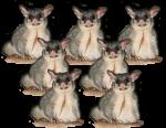 7 Possums Bev Dunbar Maths Matters