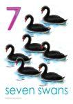 7 swans PosterJohn Duffield duffield-design
