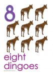 8 dingoes Poster John Duffield duffield-design