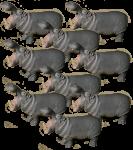 9 Grey Hippos Bev Dunbar Maths Matters