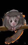 9 Possum Nine - John Duffield duffield-design
