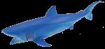 Add & Subtract 1 Blue Shark Bev Dunbar Maths Matters